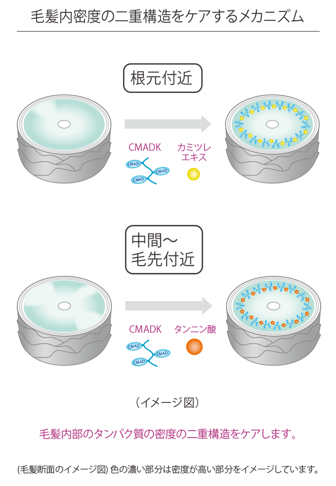 CMADKとロイシンの作用メカニズム